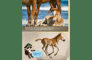 Ranger Rick Jr Beach Horses May 2014 3