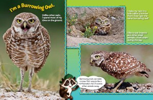 Ranger Rick Jr Burrowing Owls October 2014 2