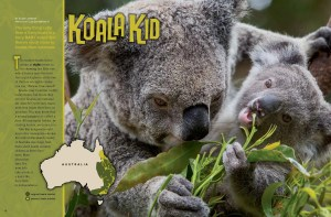Ranger Rick Koala Kid February 2014 1