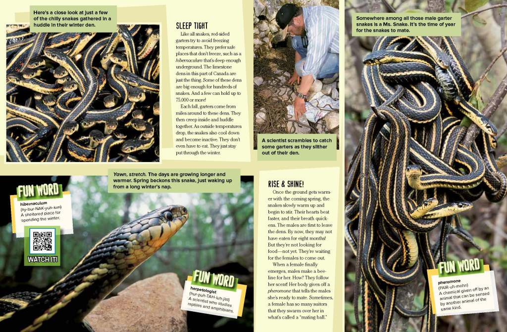 Ranger Rick Garter Snakes April 2015 2