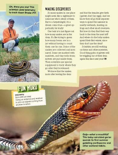 Ranger Rick Garter Snakes April 2015 3