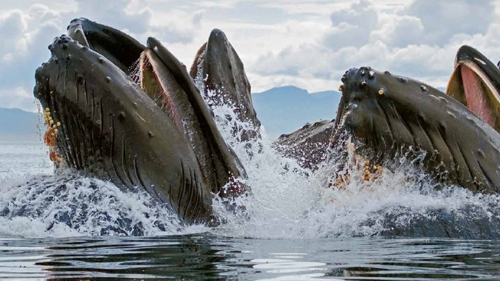 Hooray for Humpbacks!