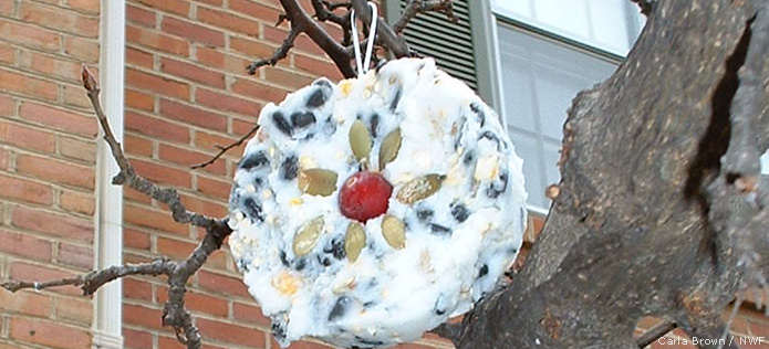 Suet ornament