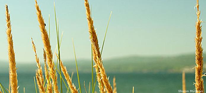 Lake grass