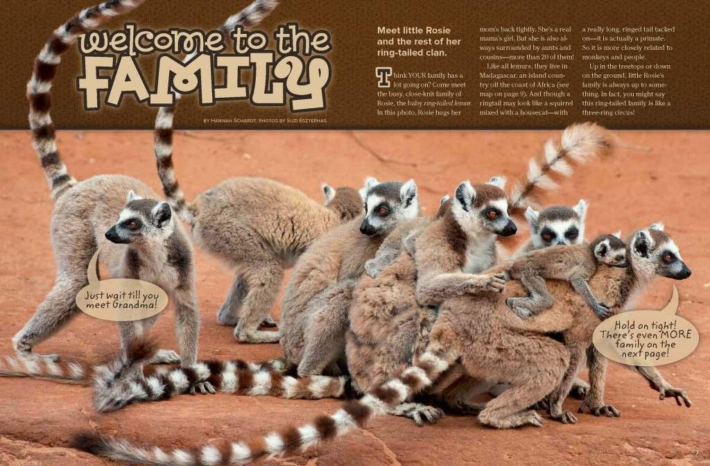 Ranger Rick Ring-Tailed Lemur May 2014 1