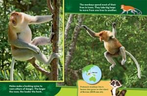 Ranger Rick Jr Nosey Monkeys September 2015 2