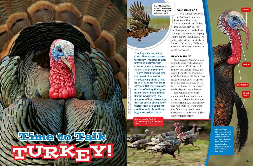 Ranger Rick Turkeys November 2014 1