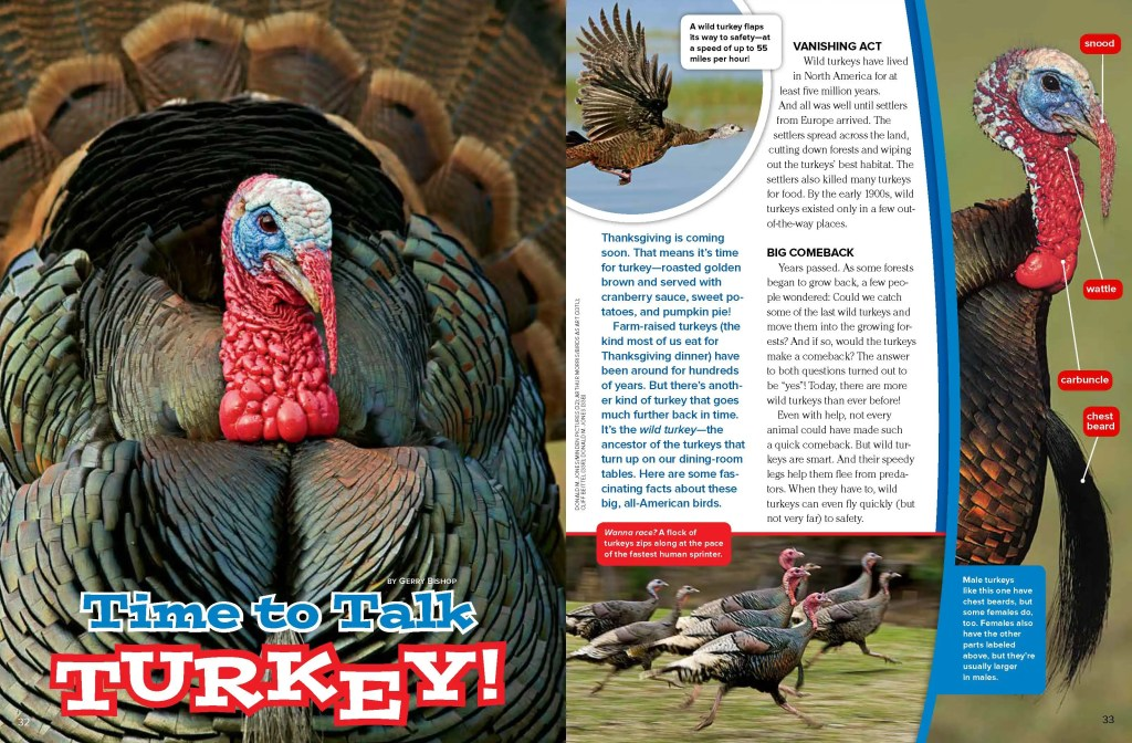 Ranger Rick Turkeys November 2014 1