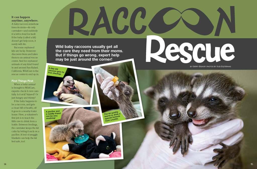 Ranger Rick Raccoon Rescue October 2014 1