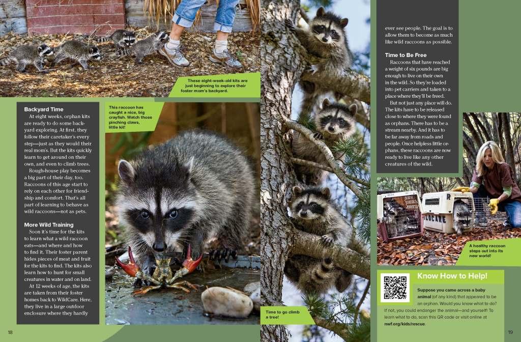 Ranger Rick Raccoon Rescue October 2014 3