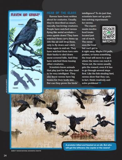 Ranger Rick Bird Brainiac October 2015 3