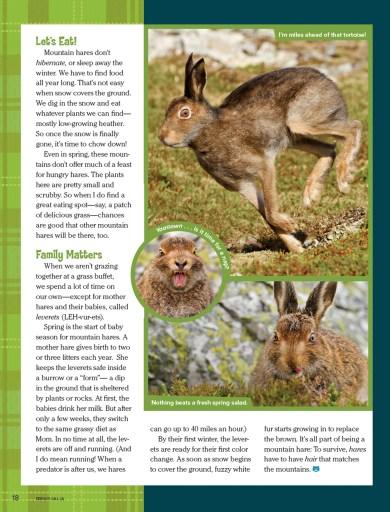 Ranger Rick Bunny March 2015 3