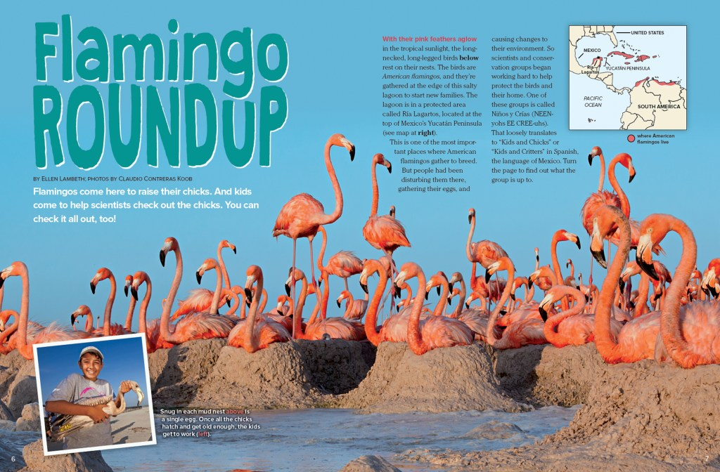 Ranger Rick Flamingo Roundup February 2016 1