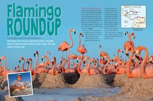 Ranger Rick Flamingo Roundup February 2016 1