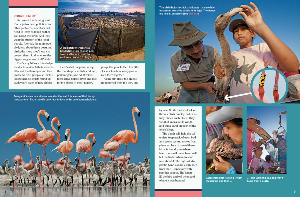 Ranger Rick Flamingo Roundup February 2016 2