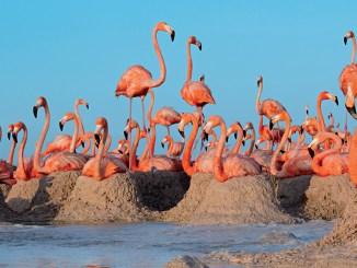 Ranger Rick Flamingo Roundup February 2016