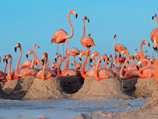 Ranger Rick Flamingo Roundup February 2016