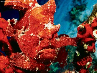 Ranger Rick Frogfish October 2016