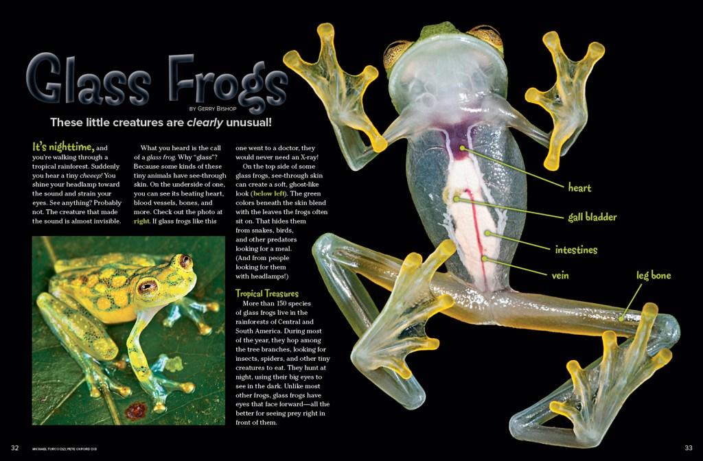 Ranger Rick Glass Frog August 2015 1