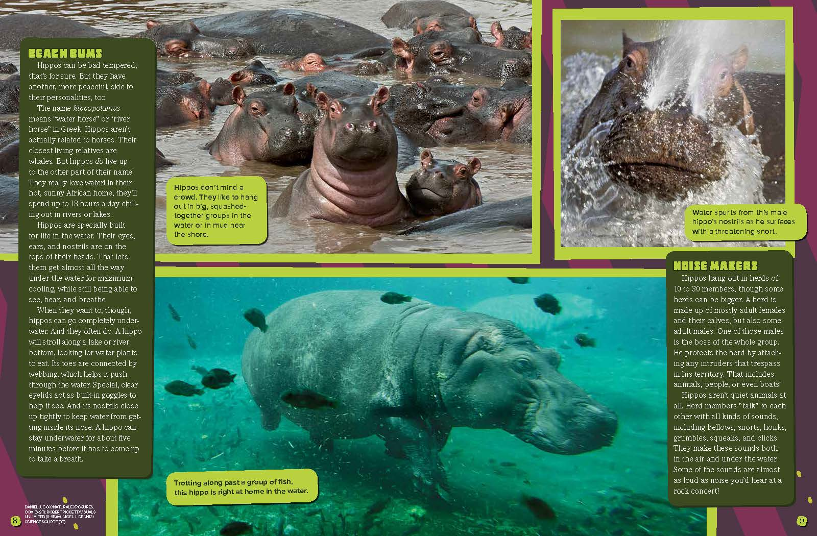 Big, Bad Hippos? - NWF | Ranger Rick