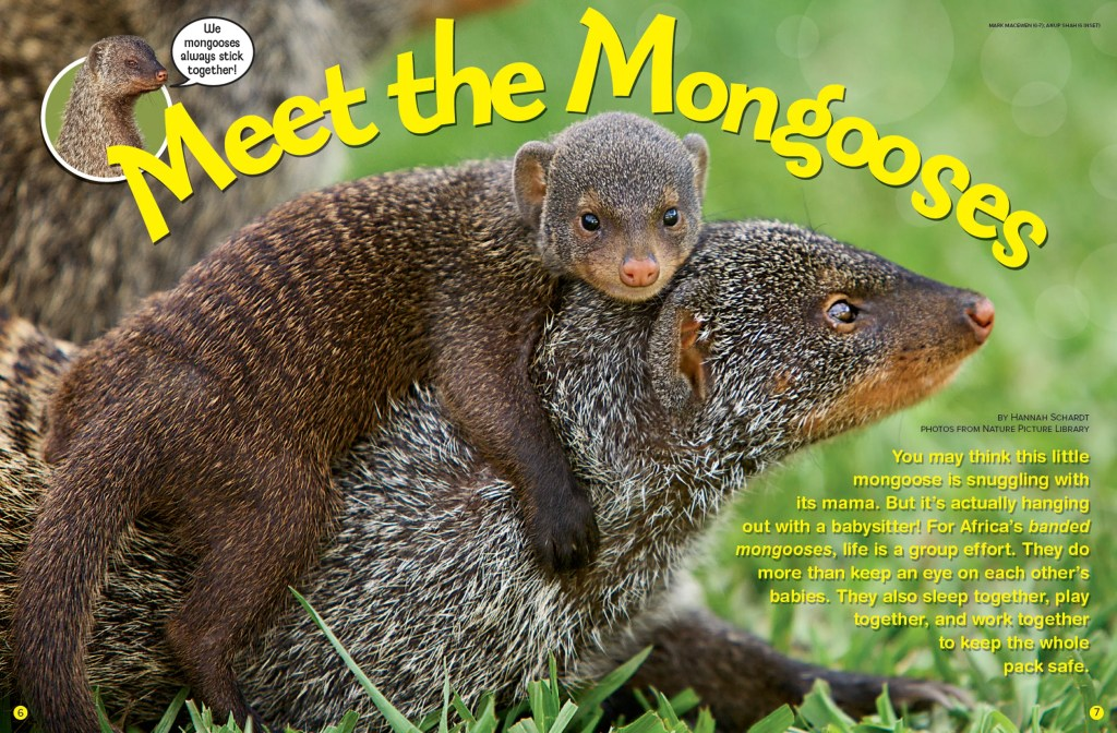 Ranger Rick Mongooses October 2015 1