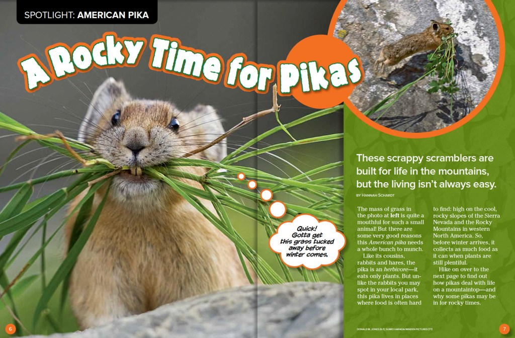 Ranger Rick Pikas August 2015 1