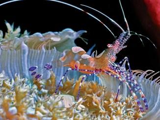 Ranger Rick Surprising Shrimps April 2015