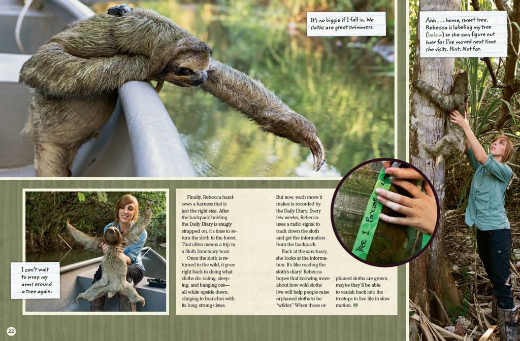 Ranger Rick Spying on Sloths September 2015 3