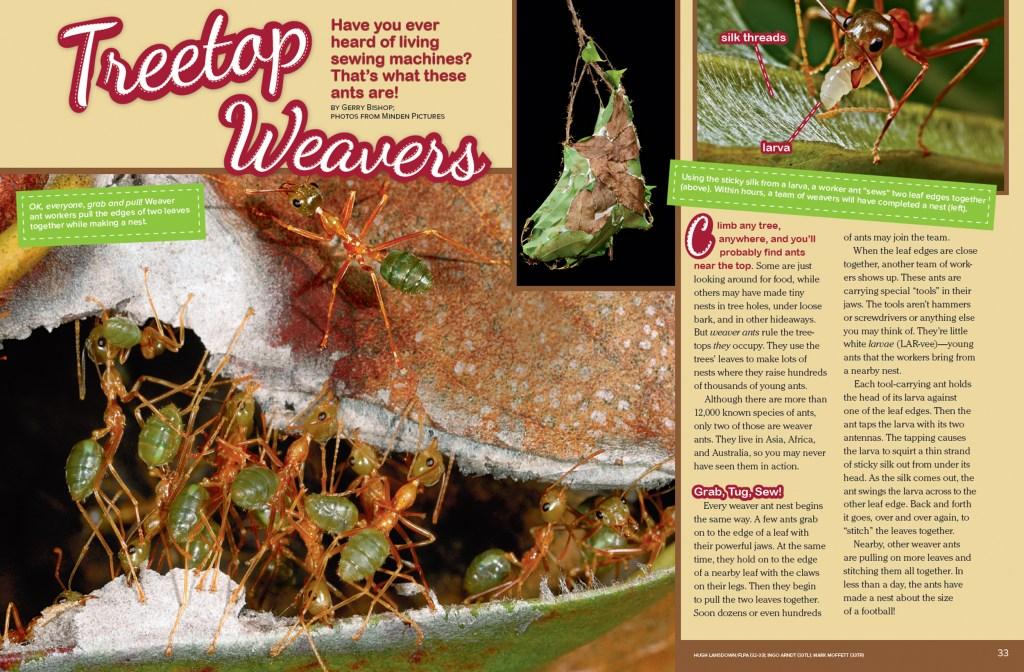Ranger Rick Treetop Weavers June July 2015 1