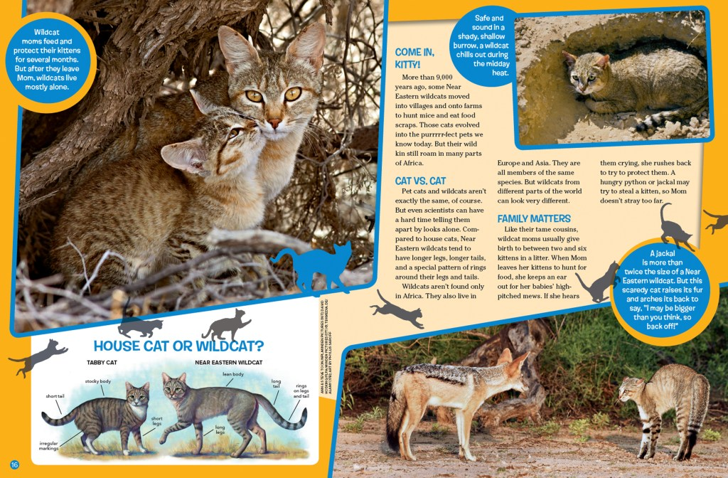 Ranger Rick Wild Cat February 2016 2