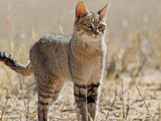 Ranger Rick Wild Cat February 2016