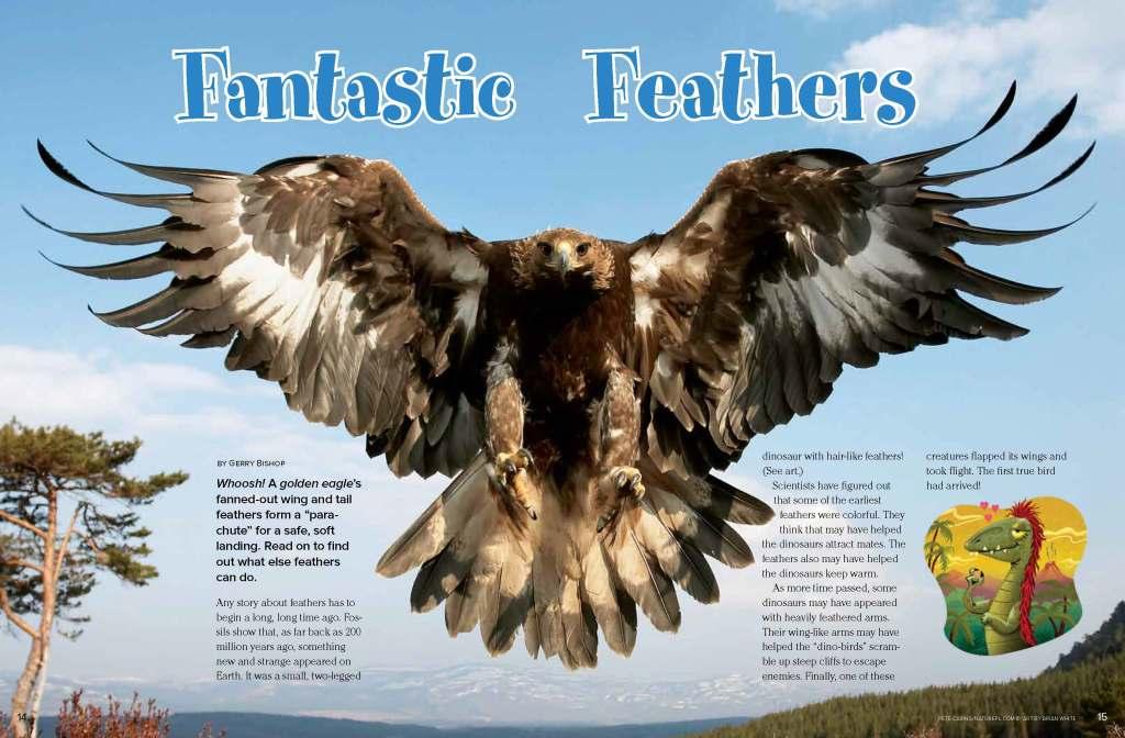 Ranger Rick Fantastic Feathers August 2013 1