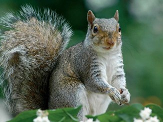 Ranger Rick Jr Squirrel Tales April 2015