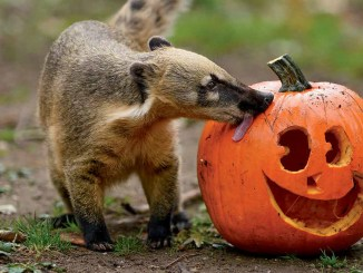 Ranger Rick Jr Pumpkin Fun October 2014