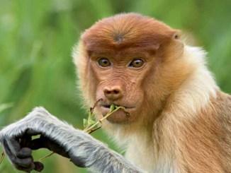 Ranger Rick Jr Nosey Monkeys September 2015