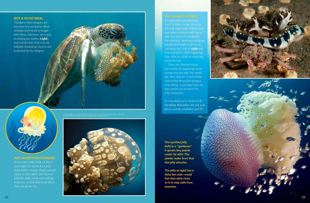 Ranger Rick Jellyfish June July 2013 3