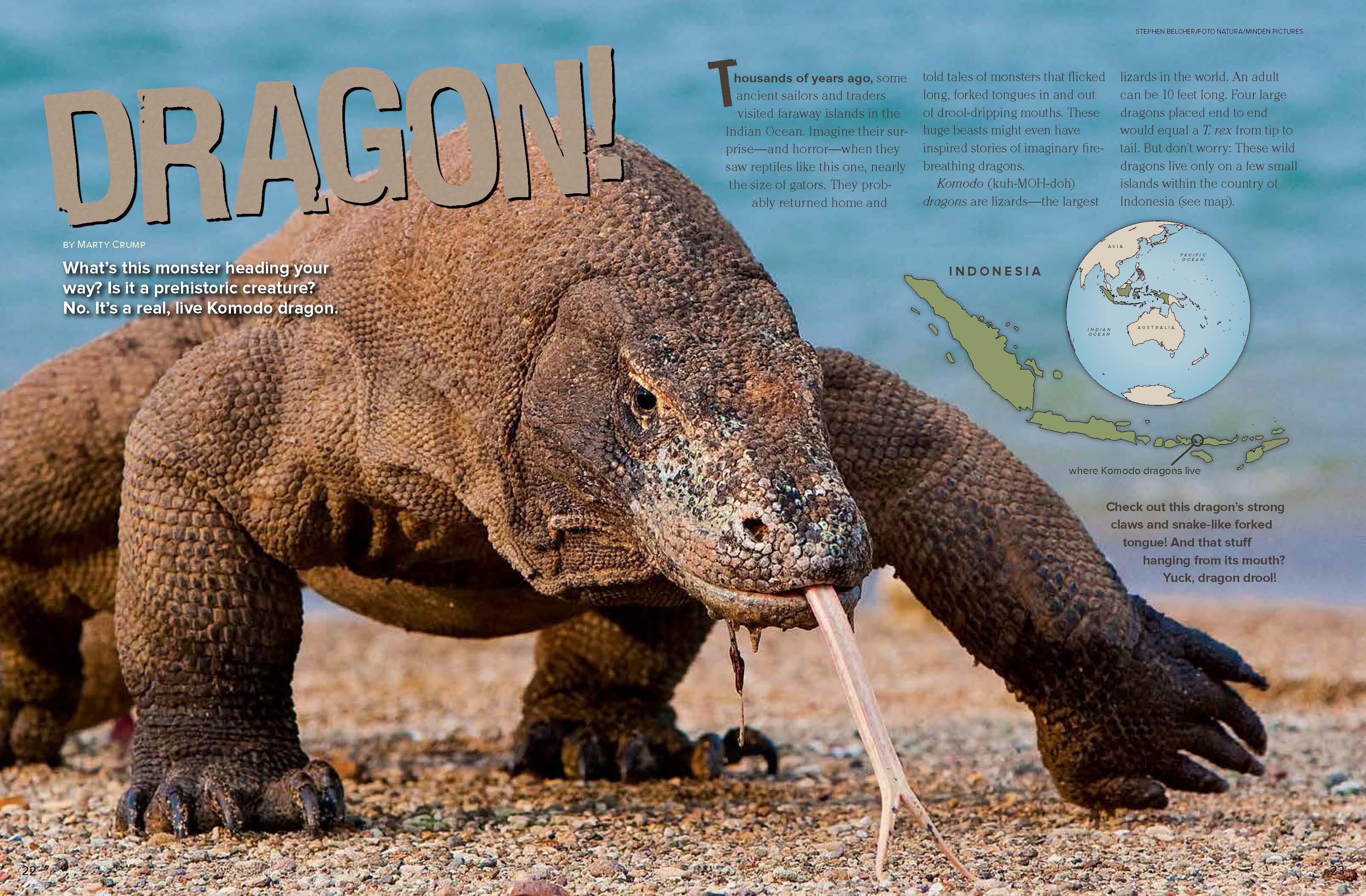 Komodo Dragons - NWF   Ranger Rick