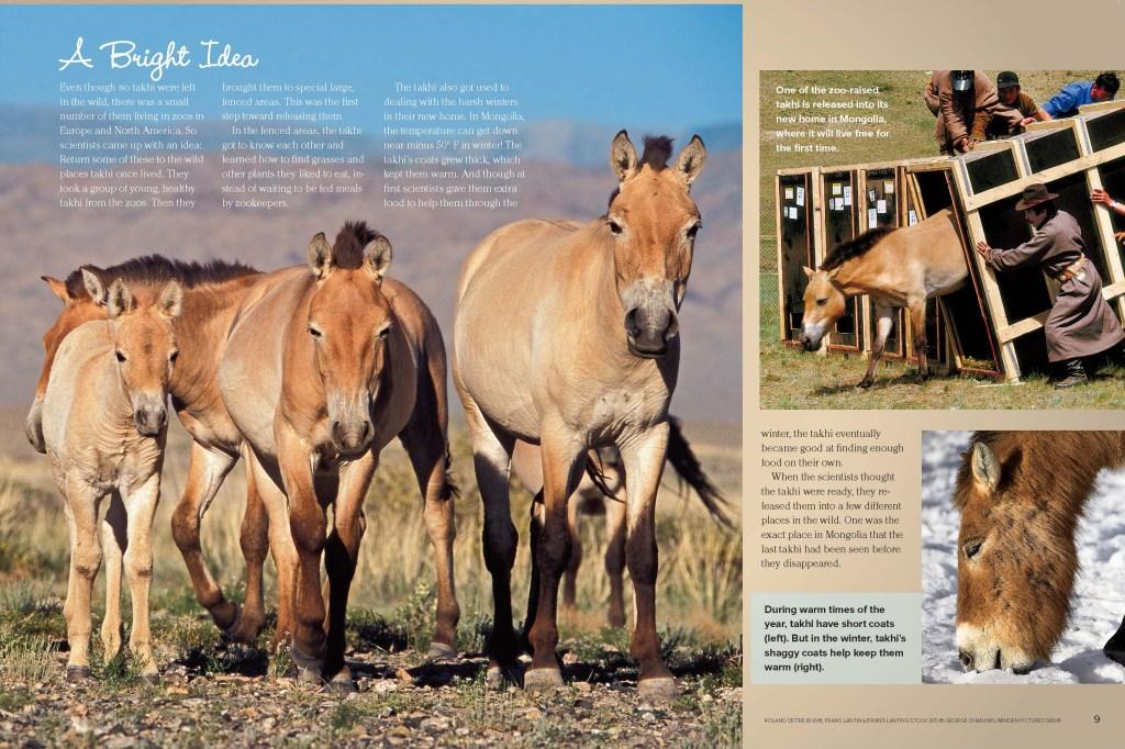 Ranger Rick Takhi Horses November 2013 2