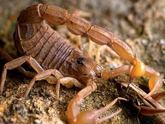 Ranger Rick Scorpions September 2013
