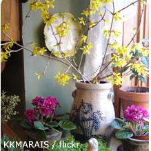 Buds in vase