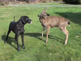Dog and deer playing