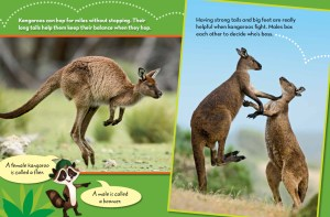 Ranger Rick Jr Kangaroo Island March 2015 2