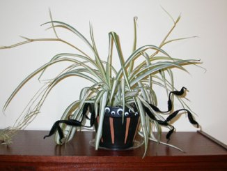 scary spider plant pot