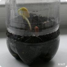 small bean plant in terrarium