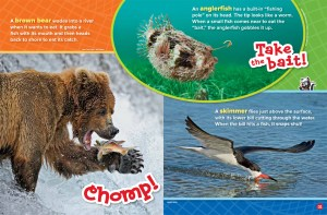 Fishing Animals JJ 2018 RR Jr-3