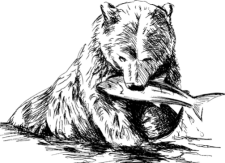 grizzly bear with fish clipart