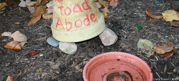 toad abode