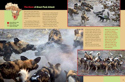 wild dog spread 2