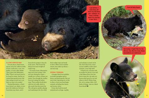 black bear spread3