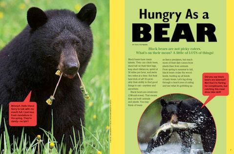 black bear spread1